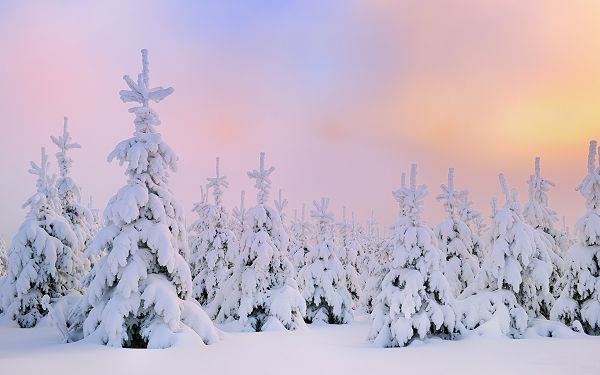 A Heavy Snow Falling, Trees and Road Are Both Covered, No One Seems to be Walking Around, Anyone Can be a Disturbance - HD Natural Scenery Wallpaper