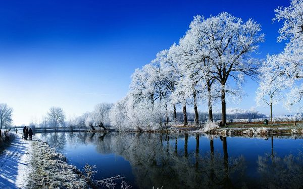 A Typical Winter Scene, Snows on the Branches of Tree, Presenting a Clear and Bright World - HD Natural Scenery Wallpaper