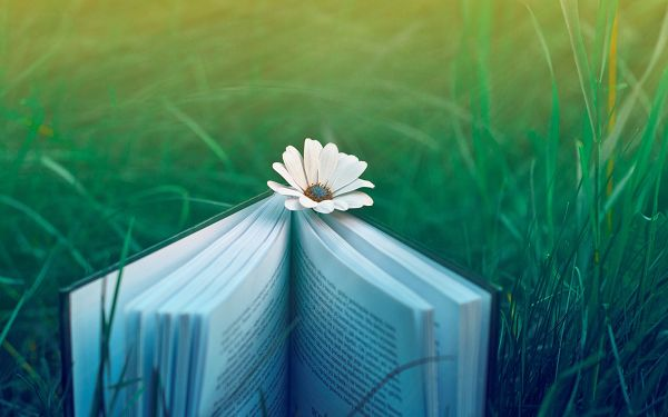 A White Flower Working as Bookmark, Reading is Made Pleasant and Comfortable, Imagine Lying on the Grass - HD Creative Wallpaper