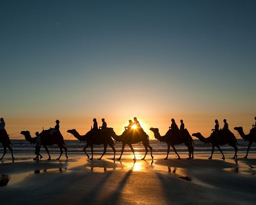 Amazing Animal Images, Enduring Camels, Walking in the Sun, a Must Have in the Desert