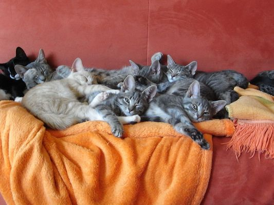 click to free download the wallpaper--Amazing Animals Pic, a Group of Sleeping Kitties, Unwilling to Get Up