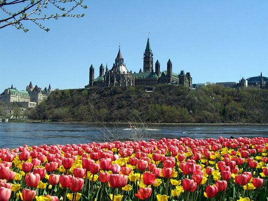 click to free download the wallpaper--Amazing Image of Nature Landscape, Parliament Hill, Colorful Tulips in the Front, a Great Addition