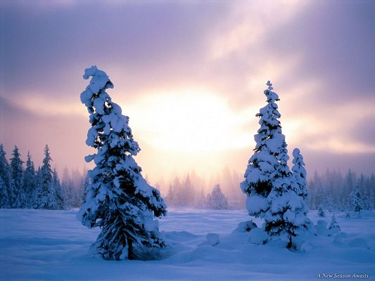 click to free download the wallpaper--Amazing Images of Nature Landscape, Trees and Ground Covered with Thick Snow, the Rising Sun