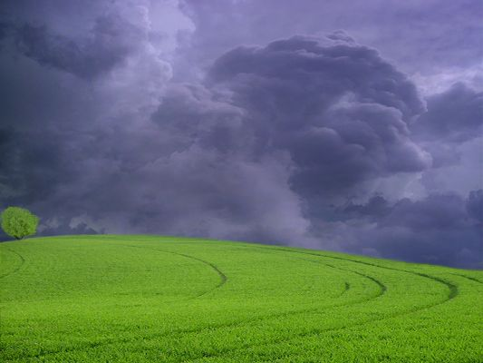 click to free download the wallpaper--Amazing Landscape Images, Green Grass Under the Dark Sky, Will It Rain?