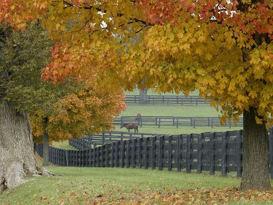 click to free download the wallpaper--Amazing Landscape Images, Horses on the Farm, Yellow Leaves, Typical Autumn Scene