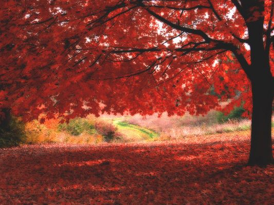 Amazing Landscape of Nature, Ombre Roses, Red Leaves Falling, Incredible Look