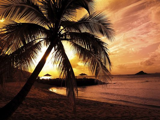 click to free download the wallpaper--Amazing Landscape of Nature, Palm Trees Under Sunset, Combine an Incredible Scene