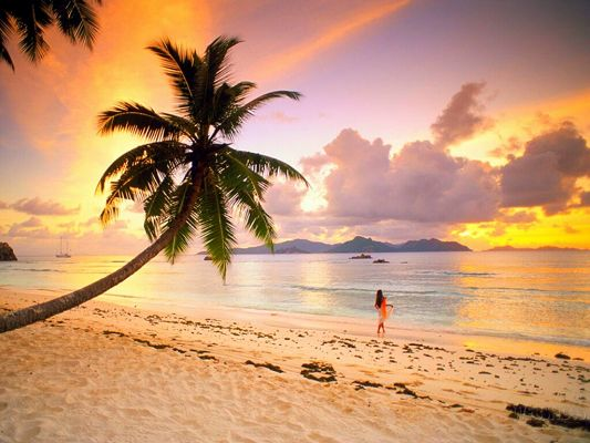 click to free download the wallpaper--Amazing Landscape of Nature, a Girl by Beachside, Palm Trees Welcoming, Great Walking Experience