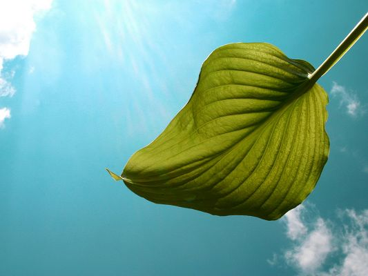 click to free download the wallpaper--Amazing Landscape of Nature, a Green Leaf in the Blue Sky, Sunshine Pouring