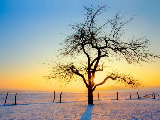 click to free download the wallpaper--Amazing Landscape of Nature, the Rising Sun, a Tall Yet Bald Tree, Snowy Scene
