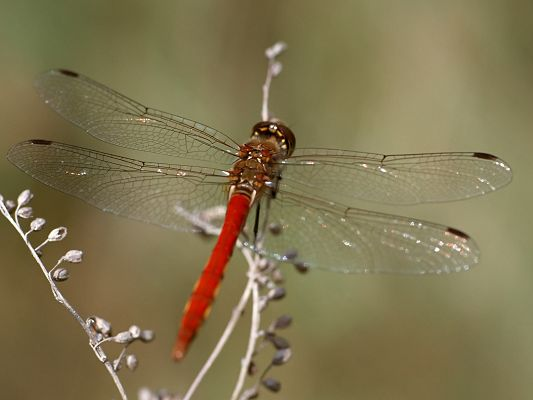 click to free download the wallpaper--Amazing Landscape with Animals, a Red Dragonfly on a White Branch, Peaceful Scene