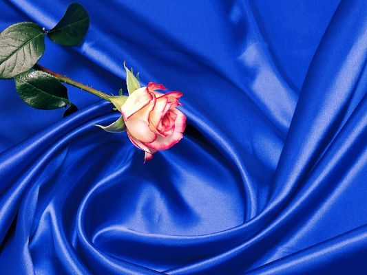 Amazing Nature Landscape Image, Rose in Art Style, Seemingly on a Blue Silk