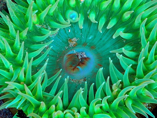 click to free download the wallpaper--Amazing Nature Landscape Image, Sea Anemone, Bubbles Around Its