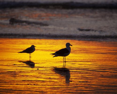 click to free download the wallpaper--Amazing Nature Landscape Pic, Seagulls at Dawn, the Setting Sun, Waiting for Fishes