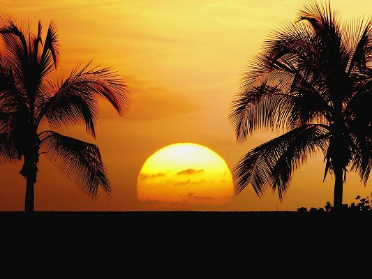 Amazing Nature Landscape, the Setting Sun, Golden Horizon, Coconut Trees Alongside