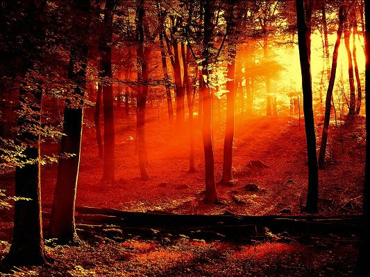 click to free download the wallpaper--Amazing Nature Landscape, the Setting Sun, Red Sunlight Breaking Through the Dark Forest