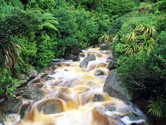 click to free download the wallpaper--Amazing Photos of Landscape, Karamea Waterfalls, the Plants Are Never Thirsty, Prosperous Growth