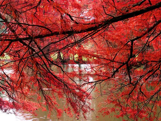 click to free download the wallpaper--Amazing Pic of Nature Landscape, Red Curtain, the Peaceful River