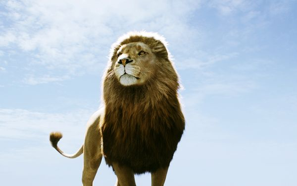 click to free download the wallpaper--Aslan in Narnia Dawn Treader Post in 1920x1200 Pixel, the King, the Good Leader is Standing to Integrity, He Should be Proud - TV & Movies Post