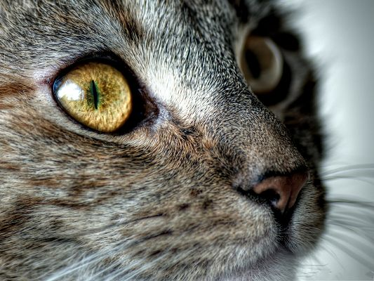 click to free download the wallpaper--Attentive Cats Picture, Kitten in Serious Look, It Stays Fully Focused