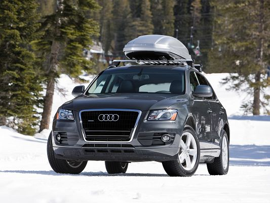 click to free download the wallpaper--Audi Cars as Wallpaper, Black Audi Q5 in the White Snowy World, Tall Trees