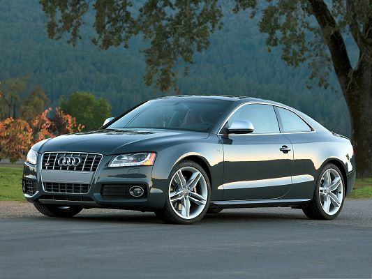 click to free download the wallpaper--Audi S5 Coupe Car as Wallpaper, Silver Car in the Stop, Among Great Natural Scene