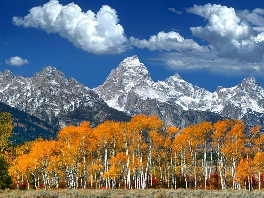 Autumn Mountain Landscape, Yellow Leaves and Tall Mountains, Incredible Scene