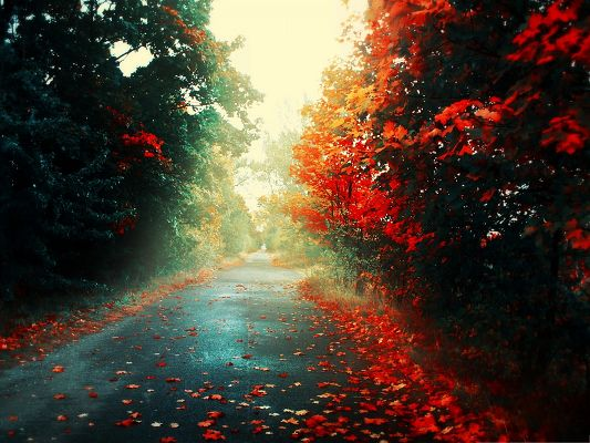 click to free download the wallpaper--Autumn Scene Landscape, Red to Brown Leaves, Falling on Clean Road