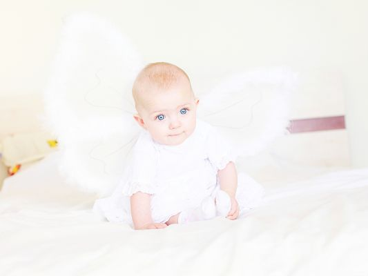 click to free download the wallpaper--Baby Angel Picture, Baby Boy in White Wings, He is the Pure Angel