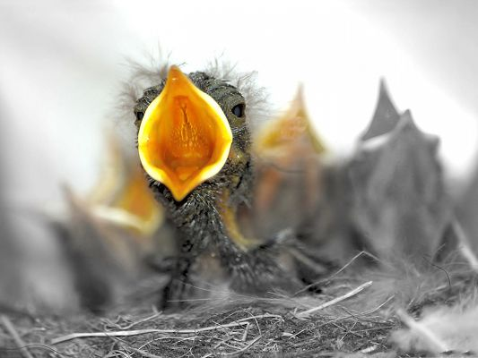 Baby Birds Photography, Yellow Mouth Wide Open, I Need Food...