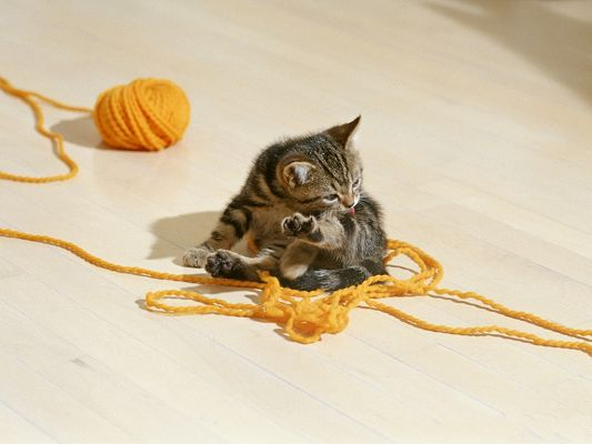 click to free download the wallpaper--Baby Pussy Cat, Playing with Yellow Woolen Yarn, Taking a Rest in the Middle