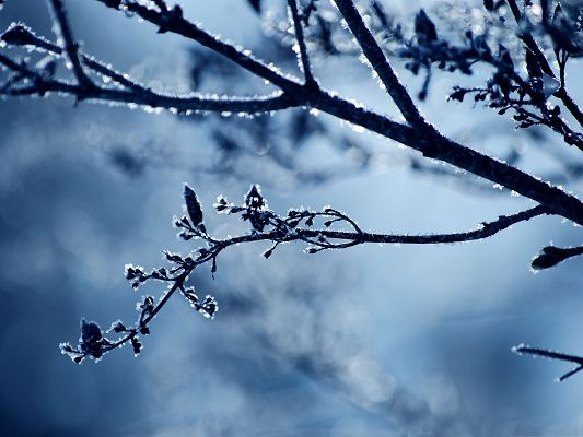click to free download the wallpaper--Background Wallpaper for Computer, Frost Branch, Snowy Winter Scene