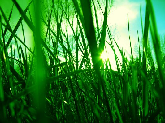 click to free download the wallpaper--Background Wallpaper for Computer, Green Reed Under Sunlight, Wish You Good