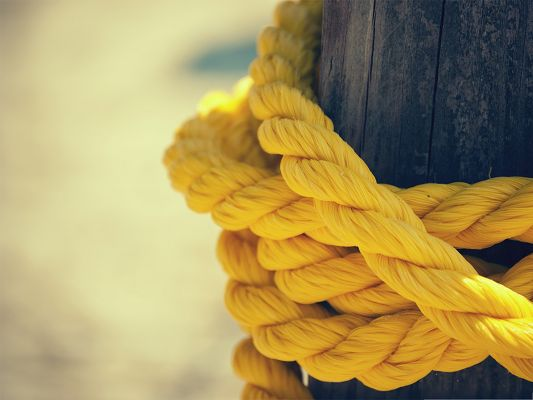 click to free download the wallpaper--Background Wallpaper for Computer, The Yellow Rope Around Tall Black Tree