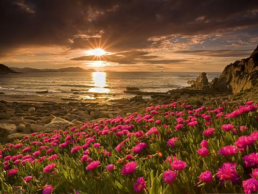click to free download the wallpaper--Beach Flowers Photography, Pink Flowers by Beach Side, Sunlight on Sea Surface