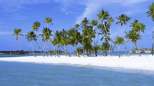 click to free download the wallpaper--Beautiful Beach Sceneries - Green and Tall Coconut Trees by the Beach, the Sea is Blue and Clear, Looking Great