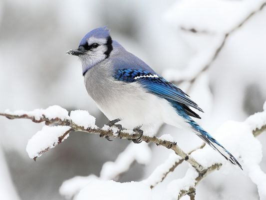 click to free download the wallpaper--Beautiful Bird Picture, Tough and Lonely Bird in Winter, Shall Survive