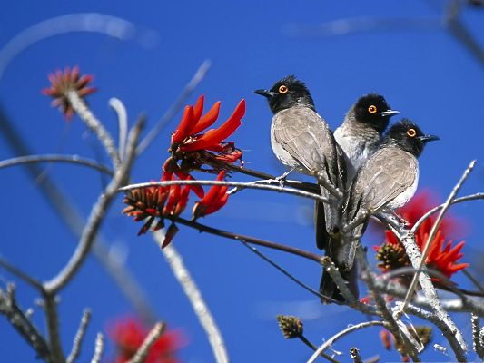 click to free download the wallpaper--Beautiful Birds Picture, Three Birds Close to Each Other, Red Blooming Flowers