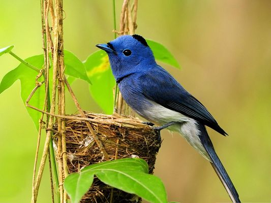 click to free download the wallpaper--Beautiful Blue Bird Pictures, Stands By Its Little Shelter, Will Fight for It