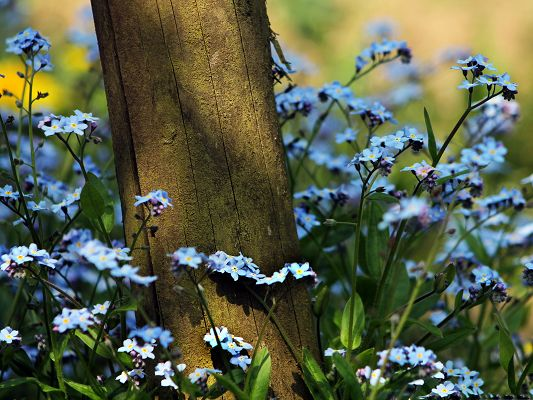 click to free download the wallpaper--Beautiful Flower Pictures, Blue Little Flowers in Bloom, Among a Tall Tree