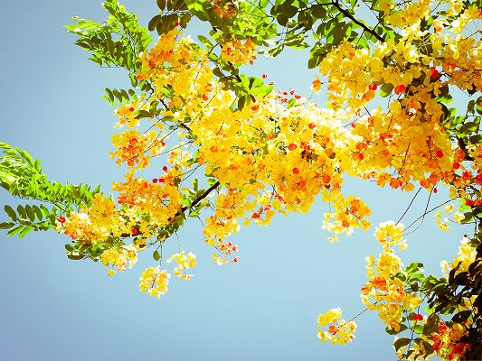 click to free download the wallpaper--Beautiful Flowers Picture, Yellow Blooming Flower in the Blue Sky, Green Leaves as Decoration