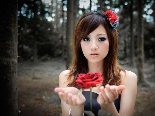 click to free download the wallpaper--Beautiful Girl Image, Nice Girl Presenting a Red Rose, Both Impressive