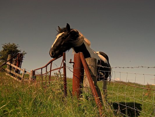 click to free download the wallpaper--Beautiful Image of Animals, a Tall Horse in Fences, Enjoying the Nature Scene