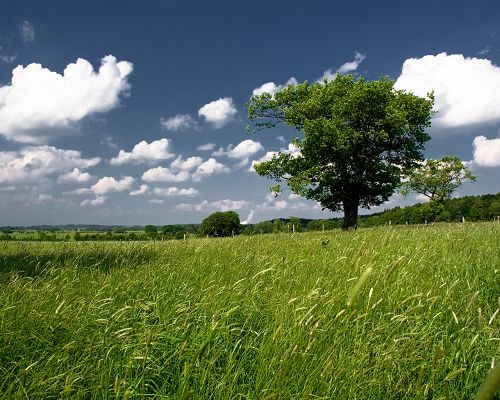 click to free download the wallpaper--Beautiful Image of Landscape, Green Tree and Grass, a Strong Wind Passing by