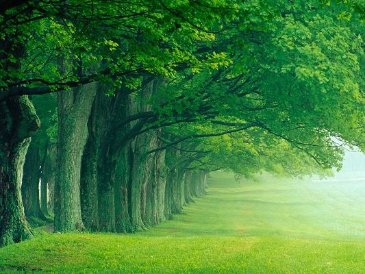 click to free download the wallpaper--Beautiful Image of Nature Landscape, Green and Lush Trees, Making Welcoming Pose
