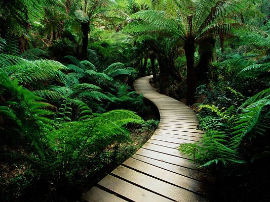 Beautiful Image of Nature Landscape, Lush Vegetation Path, Clean and Impressive Scene
