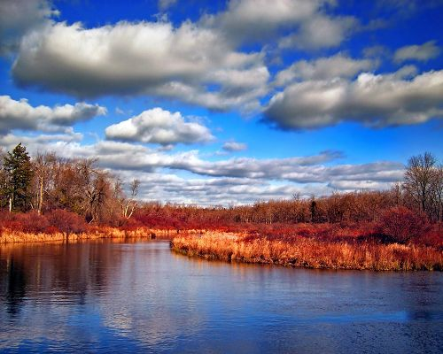 Beautiful Image of Nature Landscape, Red Dry Trees Under the Blue Sky