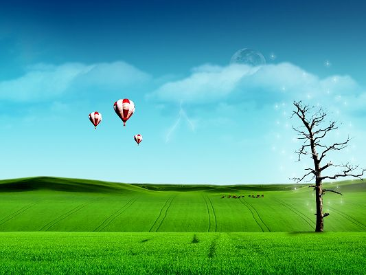 click to free download the wallpaper--Beautiful Image of Nature Landscape, Sky Balloon Over the Green Grass, a Tall and Shinning Tree