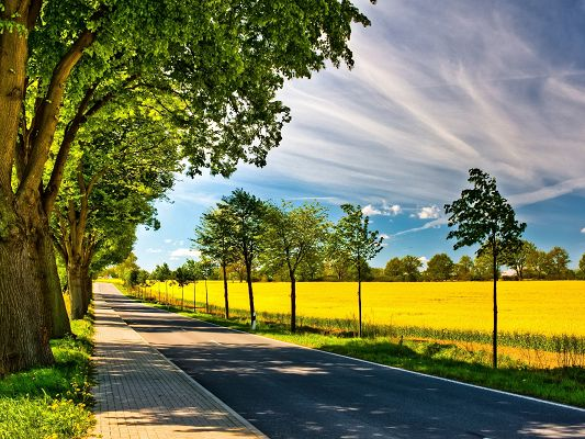 click to free download the wallpaper--Beautiful Image of Nature Landscape, Spring Road, Sunshine is Everywhere, Prosperous Growth