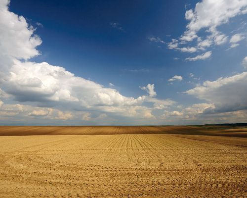 click to free download the wallpaper--Beautiful Image of Nature Landscape, Yellow Wheats Under the Blue and Cloudless Sky, Incredible Scene